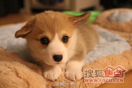 图:狗是世界上最可爱的动物,萌死了
