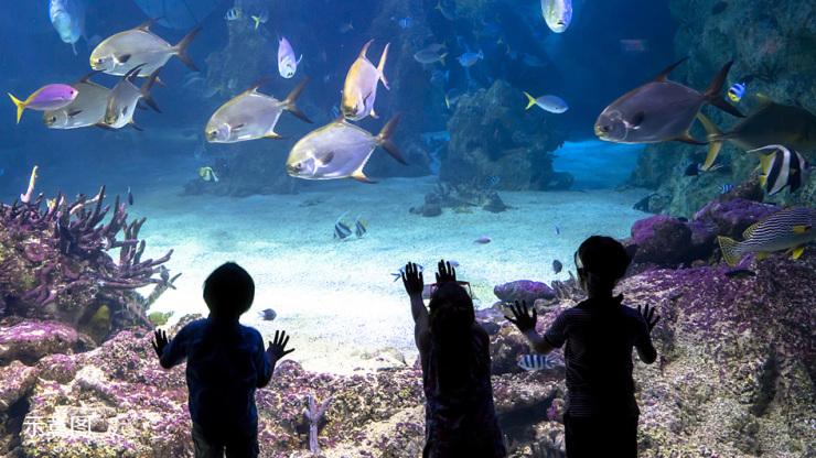 山西首个海洋公园,如何在晋中绽放魅力-太原搜狐焦点图片
