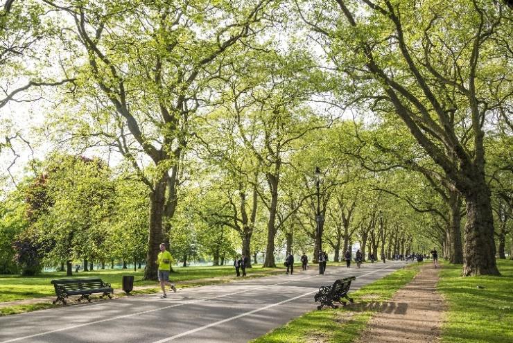还原景色树阵,组成海德园林冷暖树景观公园v景色图片