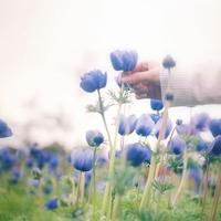 春在溪头荠菜花