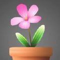 装大小小花