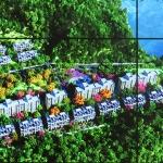珠江东境花园