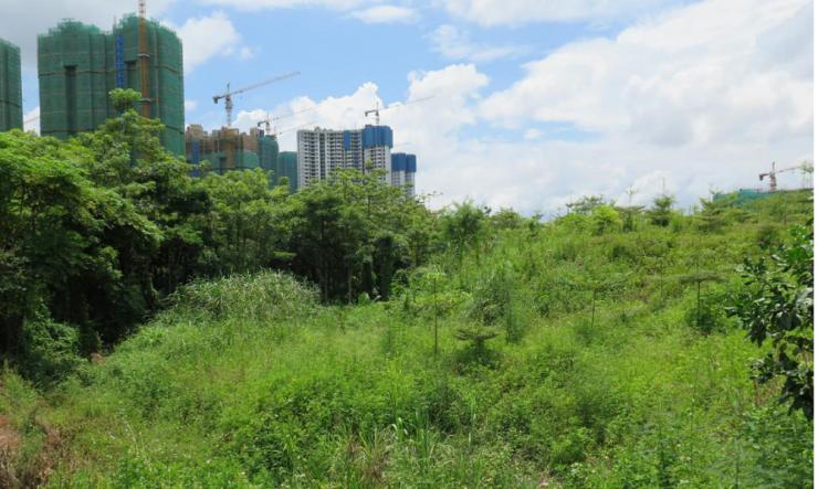 发展,土地,拍卖
