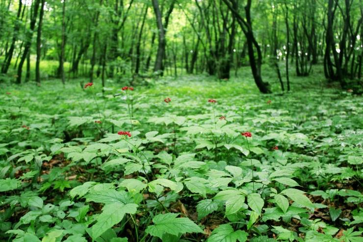 明晰集体林权,实施分类管理。济宁经济林更新改造可自主决定啦