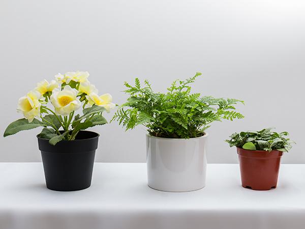 维顶科技小编教你室内花草如何选择