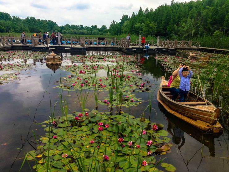 通州台湖新增万亩公园,天然氧吧即将落成