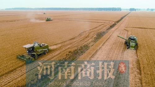 """粮食期货""""郑州价格"""" 成世界粮食市场""""晴雨表"""""""