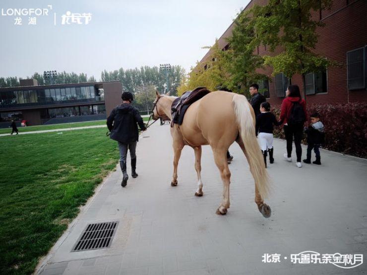 """有范儿龙民节 景粼原著迎来""""优雅运动"""""""