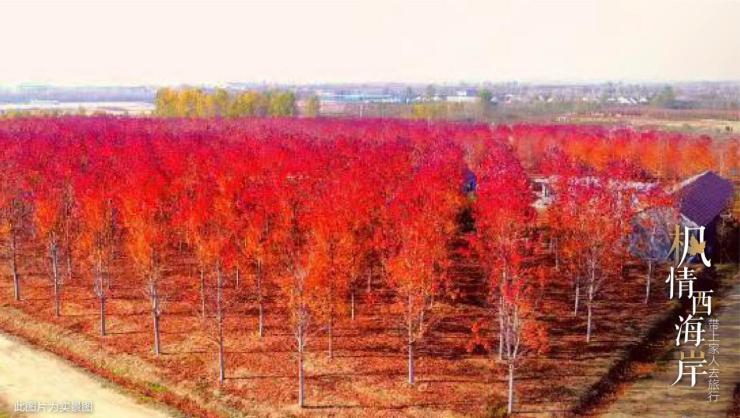 隐藏在北纬35度的绝美红叶林 原来在这儿!