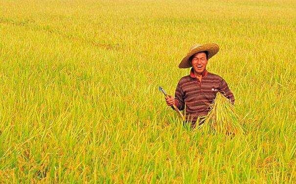 陳錫文:我國農村土地制度改革的重點與路徑