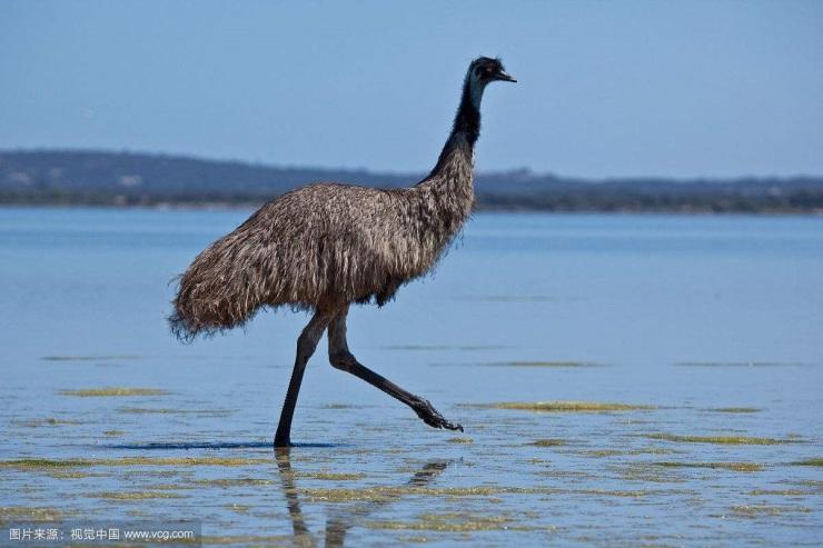 天赐的旅游资源:澳洲的稀有动物