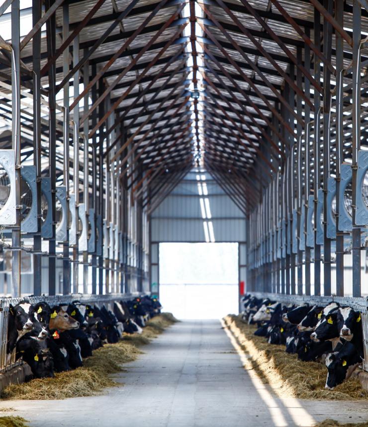 蒙牛领航中国奶业新征程 吹响振兴民族奶业的新号角