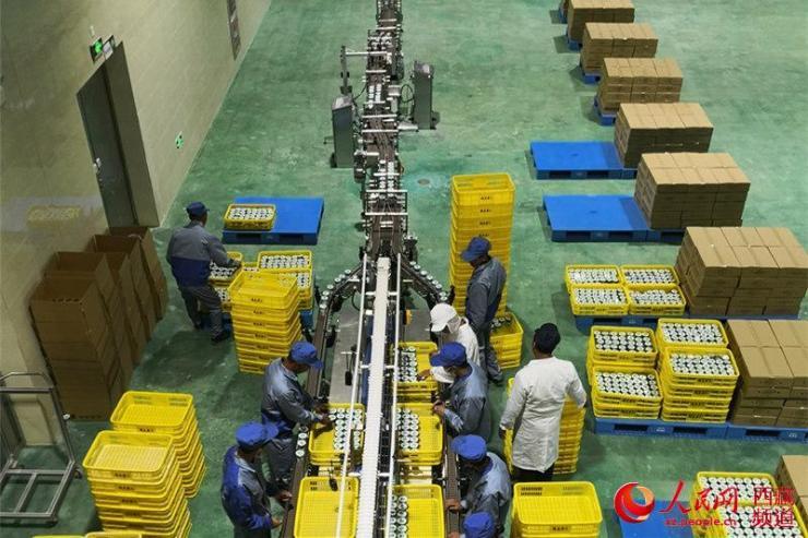 西藏规模最大乳品加工厂正式投产运营