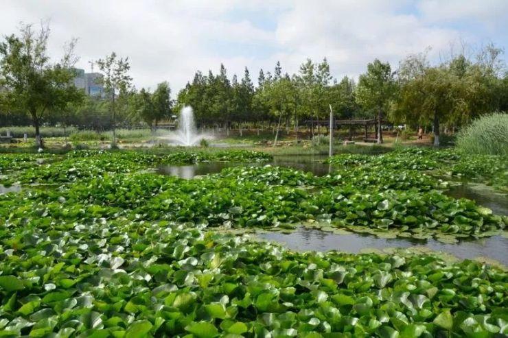 宛如仙境!大连市内这个超美湿地公园完成修复了!