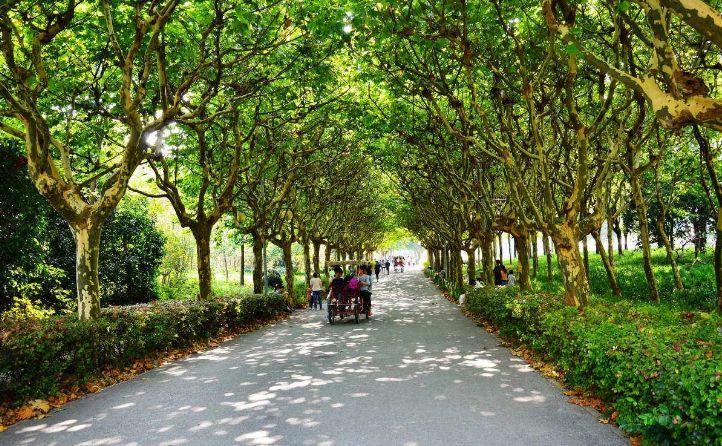 卢浮宫多肉_别浪费钱出国啦!去了上海等于去了全世界,不信你看-上海搜狐焦点