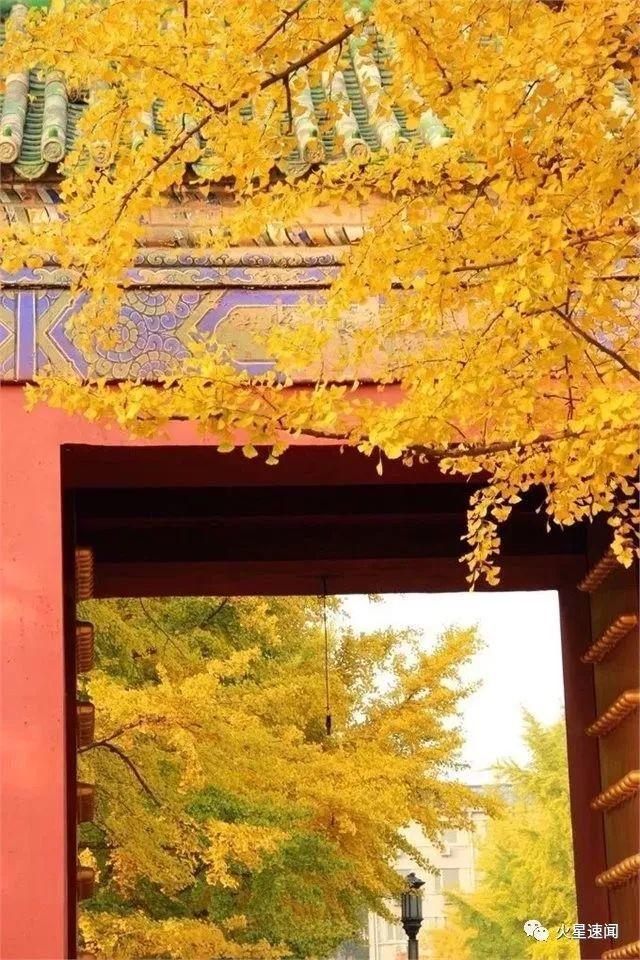 没去过不足以谈秋天,中国15个最美银杏观赏地 ,有在你家门口的吗?